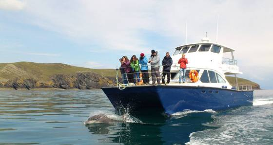 Shearwater Coastal Cruise